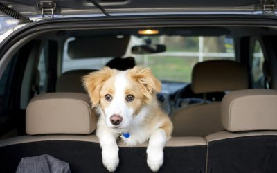 Car Travel Tips for Puppies