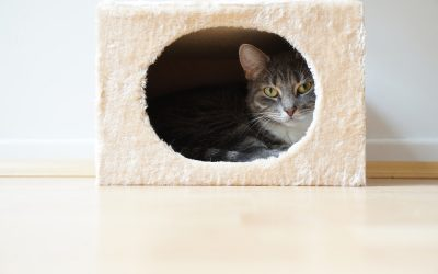 How to Build Your Cat a Den
