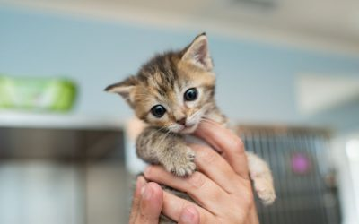 10 reasons to SWITCH to SPECIFIC KITTEN food