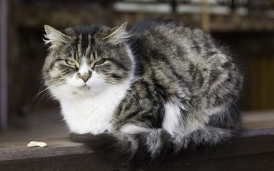 8 reasons to SWITCH to SPECIFIC SENIOR Cat