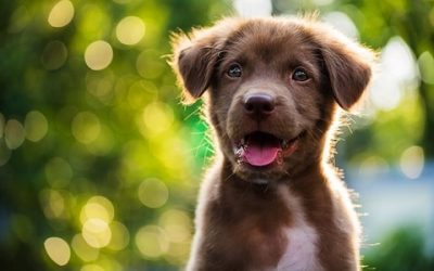 10 reasons to SWITCH to SPECIFIC PUPPY food