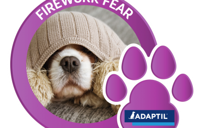 Is your pet scared of fireworks?