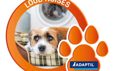 Is your pet scared of loud noises?